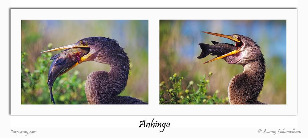 Anihanga2_srgb_web